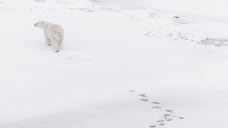 polarbear-blog-image.jpg